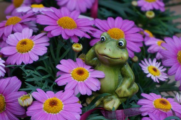 Claudias-Blumenzauber-Vomp-Muttertag-Valentinstag-13