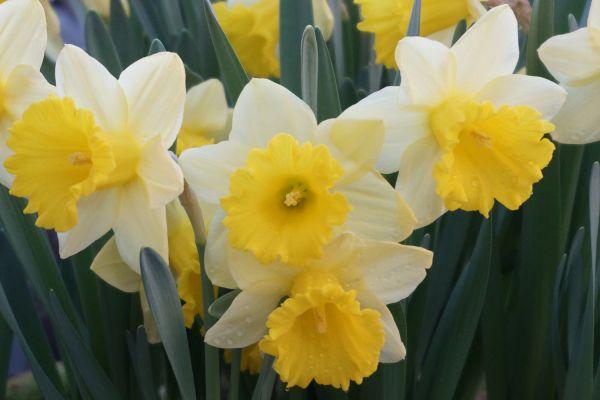 Claudias-Blumenzauber-Vomp-Muttertag-Valentinstag-5
